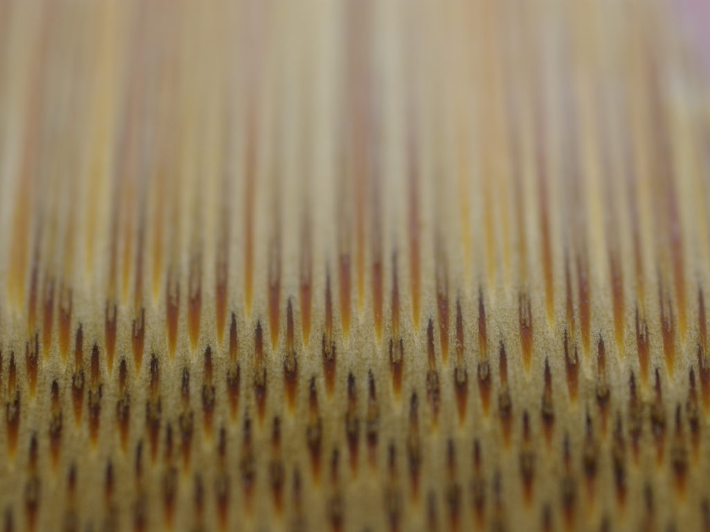 Bamboo fibre under microscope