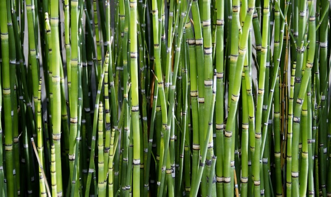 bamboo from farming to fabric
