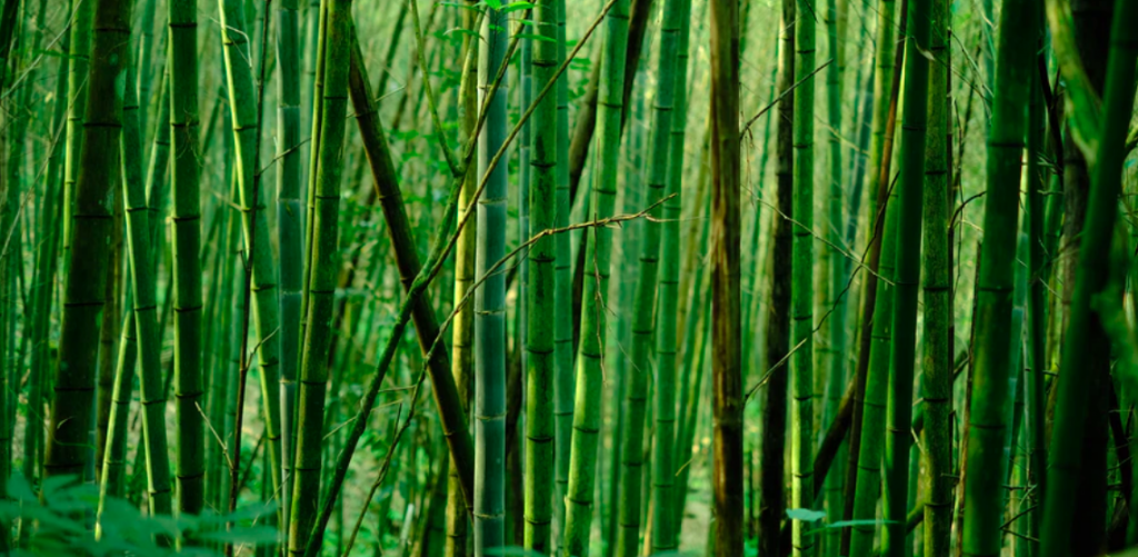 Bamboo fabric is a more sustainable fashion choice